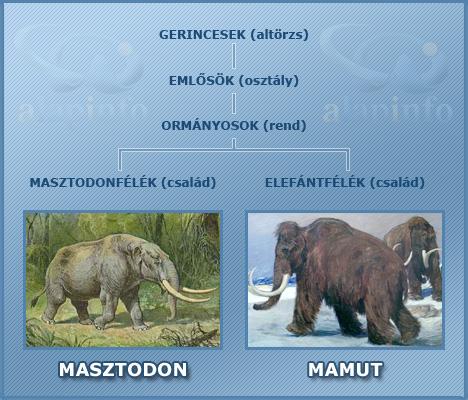 masztodon